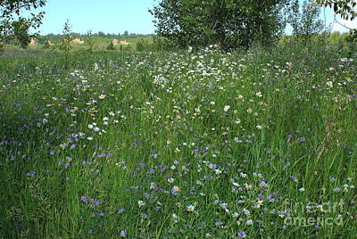 Wildflowers And Grass Print by Jim Sauchyn