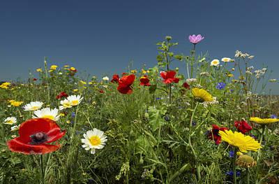 Flevoland Photograph - Wildflowers Growing In Rural Field by Mischa Keijser