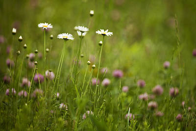 Spring Scenery Photograph - Wildflowers In The Smokies by Andrew Soundarajan