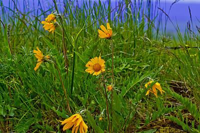 Wildflowers Art Print by Jen TenBarge