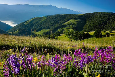 Photograph - Wildflowers Umbria by Brian Jannsen