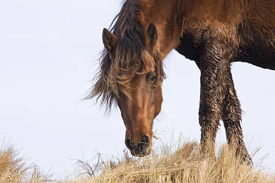 Photograph - Wildhorse On The High Dunes by Bob Decker