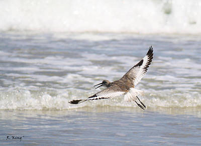 Photograph - Willet Flying by Roena King