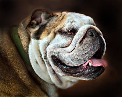 Willie Loves Me An English Bulldog Art Print by Dorothy Walker