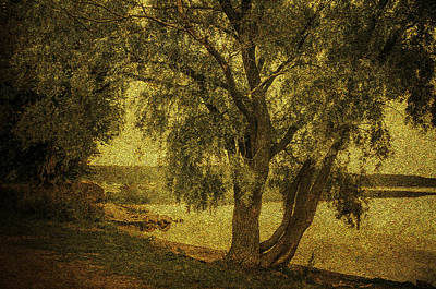 Willow At The Lake. Golden Green Series Art Print by Jenny Rainbow