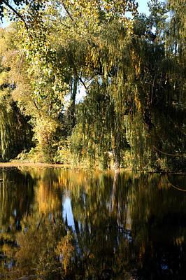 Abstract Photograph - Willow Mirror by LeeAnn McLaneGoetz McLaneGoetzStudioLLCcom