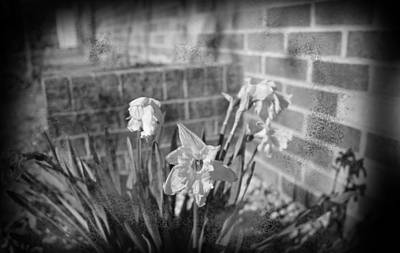 Photograph - Wilted Flowers by HW Kateley