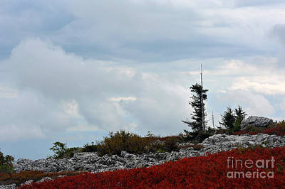 Photograph - Wind Swept Mountain Top by Dan Friend