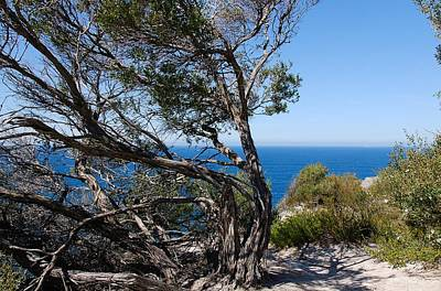 Photograph - Wind Swept Tree Overlooking Ocean by Fran Woods