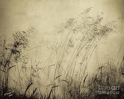 Windblown Art Print by Arne Hansen
