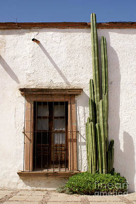 Photograph - Window And Cactus Mineral De Pozos Mexico by John  Mitchell