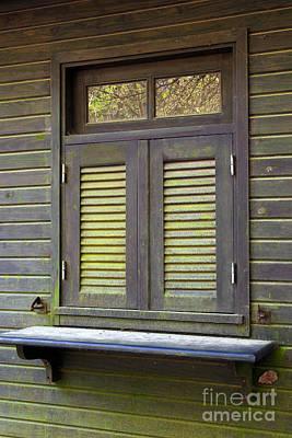 Window And Moss Art Print