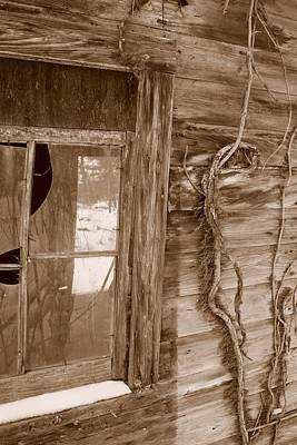 Window And Vine Art Print