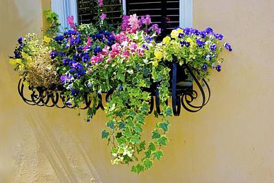 Window Box Art Print by Ralph Jones