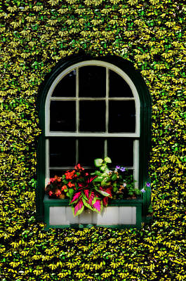 Window On An Ivy Covered Wall Art Print by Bill Cannon