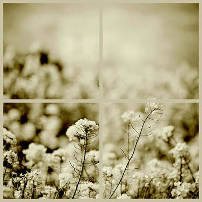 Dreamy Sepia Nature Photograph - Window View by Bonnie Bruno