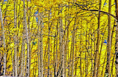 Photograph - Windy Aspen by James Steele