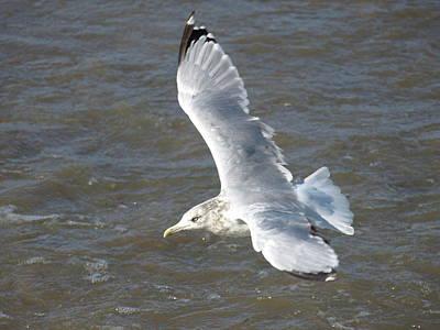 Photograph - Windy Gull - 6 by Jeffrey Peterson