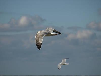 Photograph - Windy Gull - 8 by Jeffrey Peterson