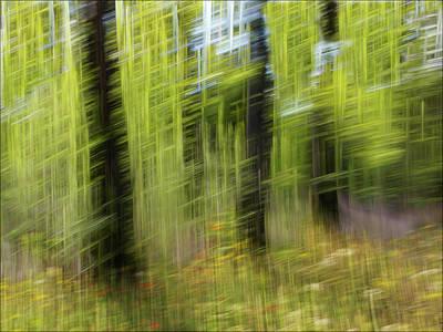 Photograph - Windy by Vladimir Kholostykh