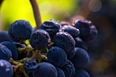Photograph - Wine Grapes by Gary Rose