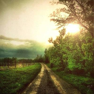 Wine Wall Art - Photograph - Wine Path by Maury Page