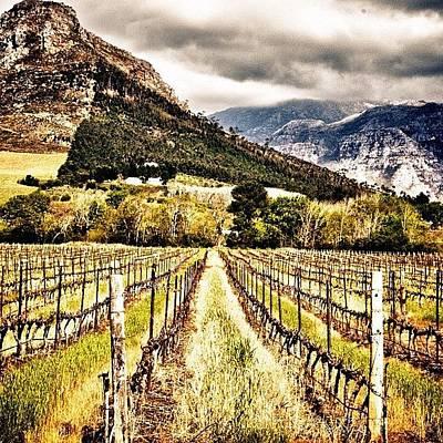 Vineyard Photograph - #wine ,#vineyard, #capetown ,#mountain by Johan Van Zyl