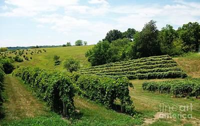 Grape Vine Photograph - Winery In Iowa by Marsha Heiken