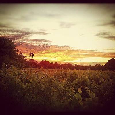 Vineyard Photograph - #winery #vineyard #scenery #sunset #sky by Glen Offereins