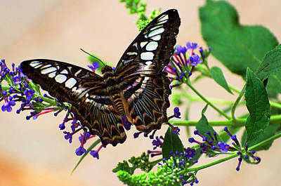 Wing Of Beauty Art Print by Cheryl Cencich