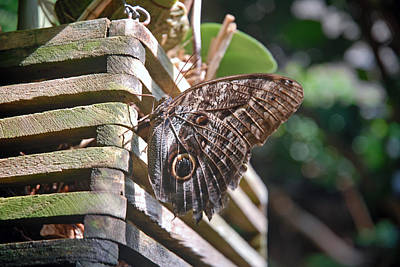 Photograph - Winged Wood by Robert Meyers-Lussier