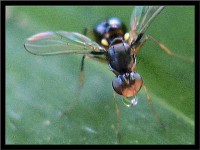 Photograph - Wingedblackants2 2002 by Glenn Bautista