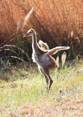 Baby Bird Photograph - Fluffy Sandhill Crane Baby by Carol Groenen