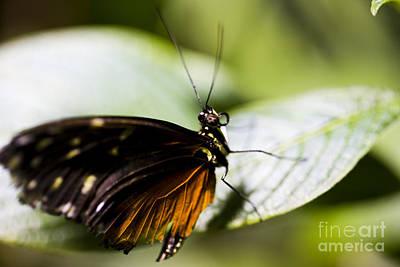 Leda Photograph - Wings by Leslie Leda
