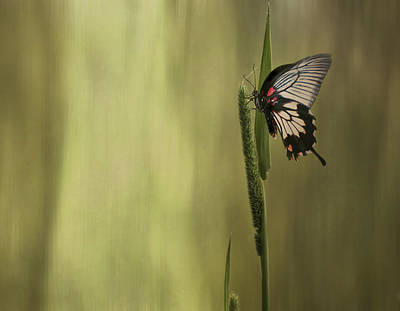 Photograph - Wings Of The Heart by Robin Webster