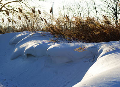 Photograph - Winter At The Shores by Margie Avellino