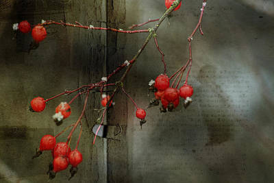 Montage Mixed Media - Winter Berries by Bonnie Bruno