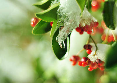 Photograph - Winter Berries by Rebecca Sherman