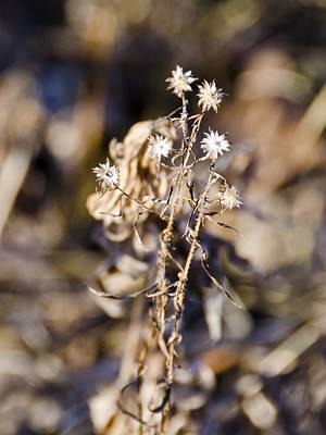 Ice Photograph - Winter Blossom Fairy by LeeAnn McLaneGoetz McLaneGoetzStudioLLCcom