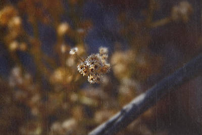Photograph - Winter Bouquet by Mark  Ross