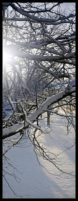 Photograph - Winter Branches by Tim Nyberg