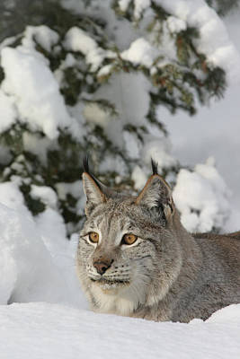 Photograph - Winter Cat by Diane Bohna