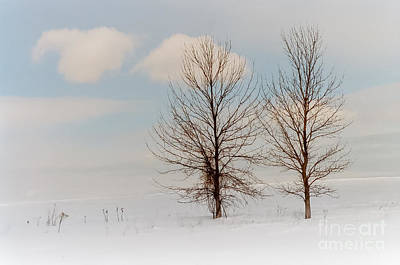 Feild Photograph - Winter Companion by Ken Marsh