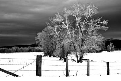 Photograph - Winter Cottonwoods by Eric Tressler