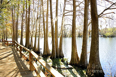 Photograph - Winter Cypress By The Water by Nancy Greenland