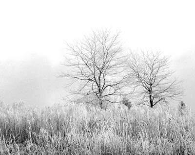 Photograph - Winter Day by Julie Palencia