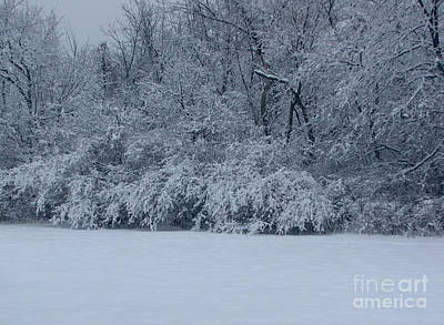 Photograph - Winter Delight by Cedric Hampton