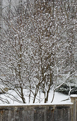 Photograph - Winter Dogwood by Margie Avellino