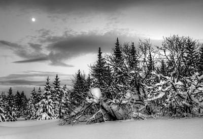 Art Print featuring the photograph Winter Evening by Michele Cornelius