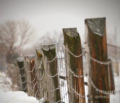 Winter Fence Art Print by Sandra Cunningham